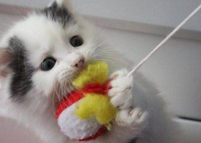kitten-rehomed-rspcaleedsandwakefield
